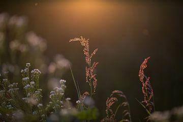 Pflanzen in der Abendsonne von Janny Beimers