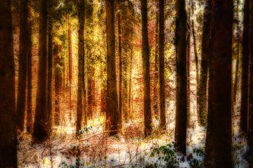 Kleuren in het winterbos van Nicc Koch