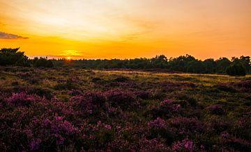 Heide bij zonsondergang  van Paula Darwinkel