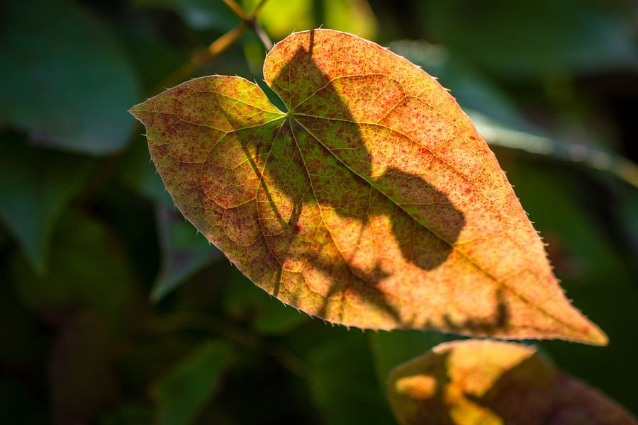Shadows Of Autumn van William Mevissen