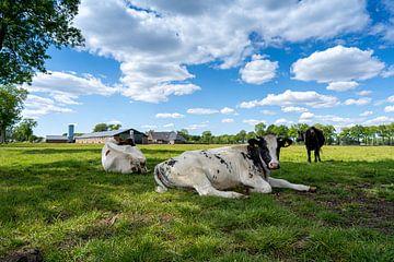 koeien in de wei op groen gras en mooie wolkenwolken. van Marco Hoogma
