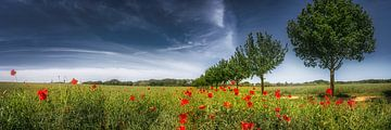 Feld mit Mohnblumen im Sommer von Voss Fine Art Photography