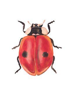 Druck eines Marienkäfers, spezielle Insektenillustration von Angela Peters