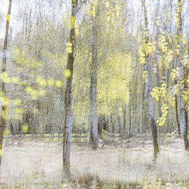 Lenteimpressie met berken in het voorjaar van Teuni's Dreams of Reality