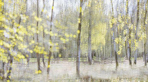 Lenteimpressie met berken in het voorjaar