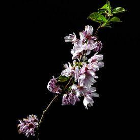 Une fleur comme nature morte sur Steven Dijkshoorn