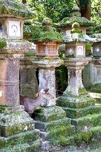 Hirsche zwischen Steinlaternen in Nara versteckt