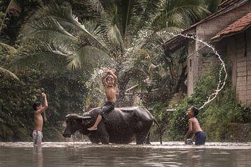 Waschen des Wasserbüffels von Anges van der Logt