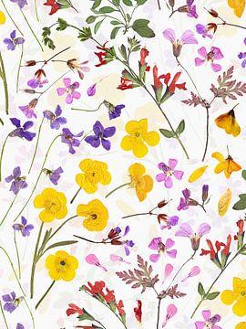 Mittsommer Gepresste Blüten Wiese von Uta Naumann