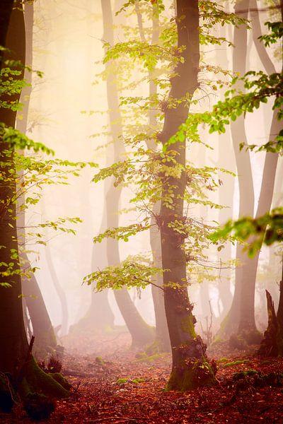 Herfstbos in de mist van Mark Scheper