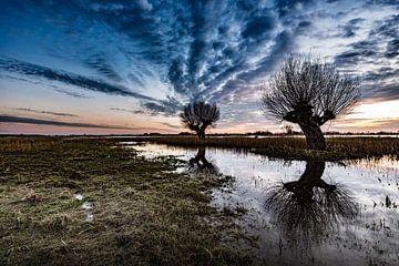 Knotwilgen in weiland tijdens de zonsondergang  van Michel Knikker