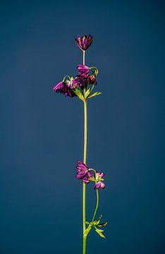 Lassen Sie Ihre Blume nicht hängen (blau) von michel meppelink