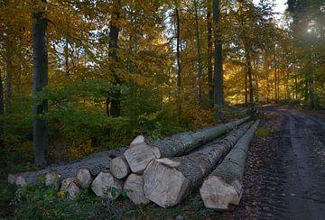 Holz im Wald von Dieter Beselt