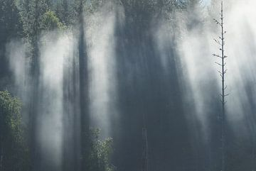 Zonnenstralen breken door de mistige boomkruinen van Mindy Molein