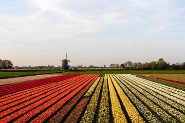 Bollenvelden met molen I Tulpen I Noord-Holland I Kleurverloop I Art kleurenprint van Floris Trapman