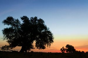 Weide mit Sonnenaufgang von Irene Damminga
