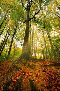 The beauty of autumn van Wim van D