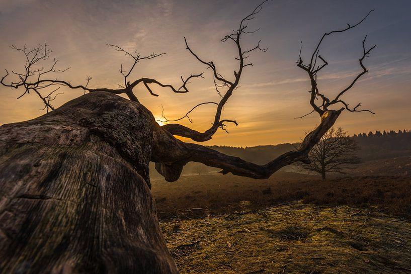 Old Tree van Davy Sleijster