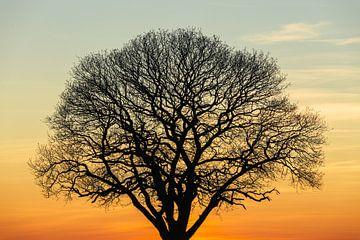 Boom tijdens zonsondergang van Tijmen Hobbel
