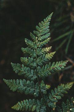 Segeln im Wald von Tessa Dommerholt