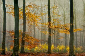 Herfst von Piet Haaksma