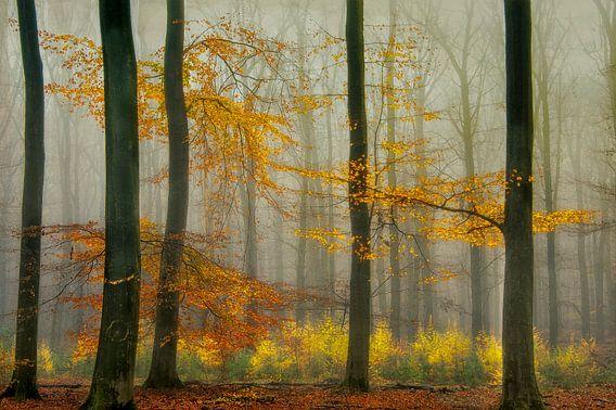 Herfst van Piet Haaksma