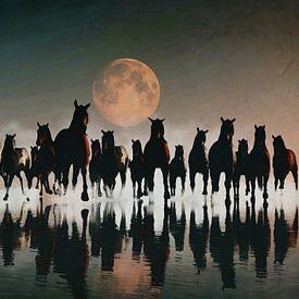 Kudde paarden in de avond aan zee sur Jan Keteleer
