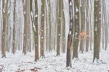 Sneeuw in een nevelig beukenbos