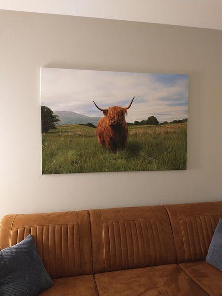 Klantfoto: Schotse hooglander van Marly Tijhaar