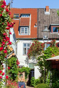 Rosengang, Lübeck, Schleswig-Holstein, Deutschland, Europa von Torsten Krüger