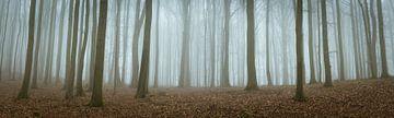 Geheimnisvoller Wald von Tobias Luxberg