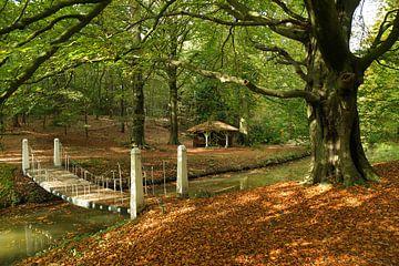 Herfst, Autumn van Yvonne Balvers