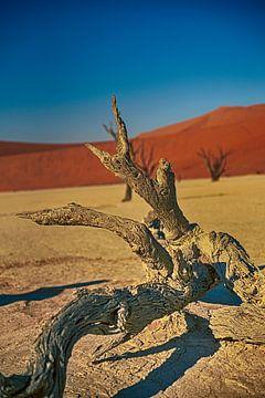 Dead vlei Namibie van Danielle van Leeuwaarden