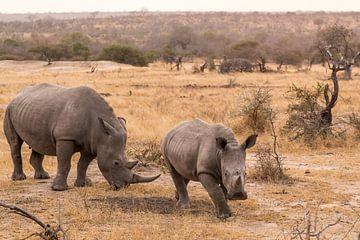 Rhino (1) sur