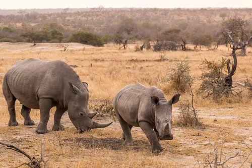 Rhino (1) von Mayra Pama-Luiten