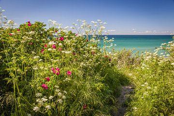 Üppig blühendes Ufer an der Ostsee von Christian Müringer