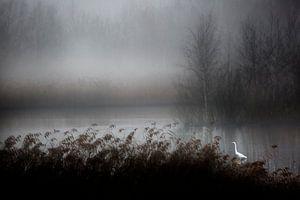 Zilverreiger in de mist