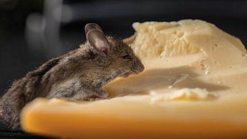 Maus mit Käse von Gerrit van Leeuwen