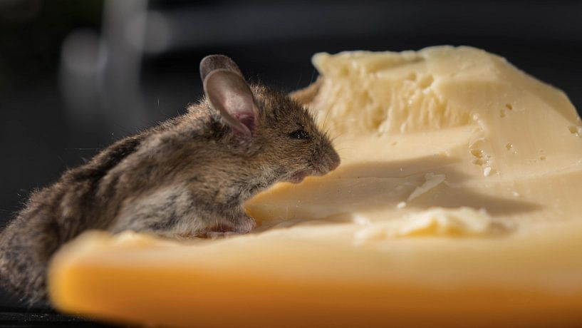 Muis met kaas van Gerrit van Leeuwen