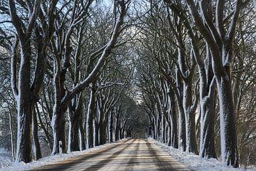 Allee im Winter mit dunklen kahlen Bäumen und weißem Schnee, gefährliches Fahrkonzept, Kopierraum, a von Maren Winter