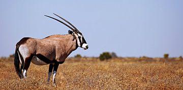 Oryx - Afrika wildlife von W. Woyke