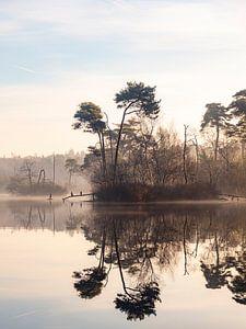 Vögel im Morgennebel in Oisterwijk von Evelien Oerlemans