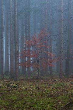 Herfst in het mistige bos van Denis Feiner