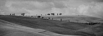 Monochrome Toskana im Format 6x17, Baumreihen in San Quirico D'Orcia von Teun Ruijters