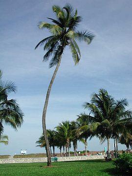 Palmboom van Alex Hilligehekken