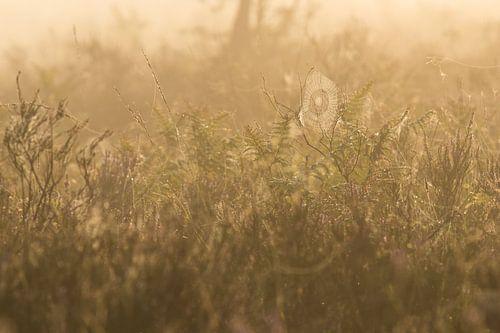 spinnenweb op de heide van Francois Debets