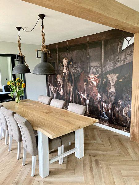 Klantfoto: Koeien in oude koeienstal van Inge Jansen, op naadloos behang