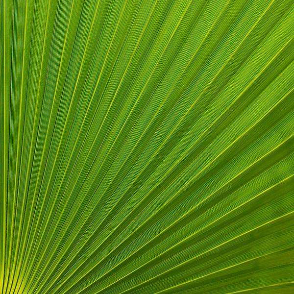 Palm Leaf van Greetje van Son