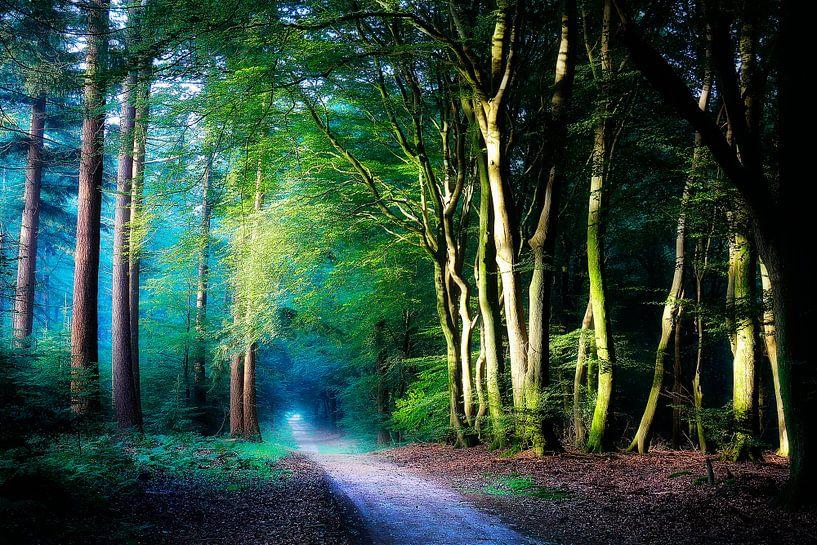 Kleurrijk Bos van Rigo Meens
