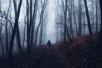 Mystischer Wald 014 von Oliver Henze